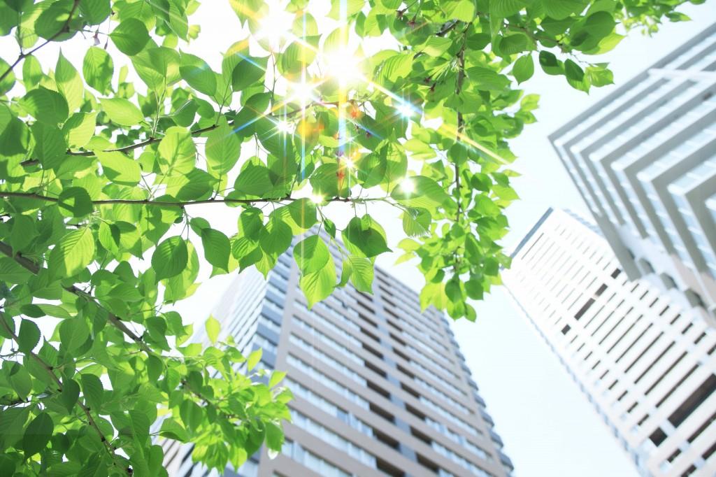 高層ビルと若葉